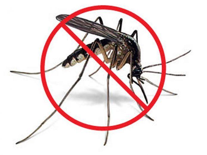 bắt muỗi